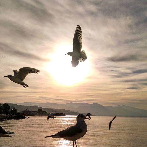 Özgürlük ⛅⛅⛅ Nofilter Sun Bird Marti Konak Izmir Love Sunset Natural Photo New Art Izmirdeyasam Izmirli Fly özgürlük
