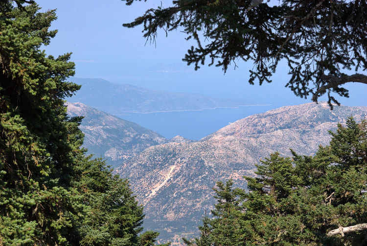 Panorama dal Monte Enos Plant Tree Beauty In Nature Mountain Scenics - Nature Sky Tranquility Tranquil Scene Nature No People Growth Idyllic Non-urban Scene Day Green Color Mountain Range Outdoors Land High Angle View Environment Mountain Peak Coniferous Tree Cefalonia Cefalonia Island Island Greek Islands Greek Summer Greek Landscape Abies Cefalonica Park Of Mount Enos Mount Enos