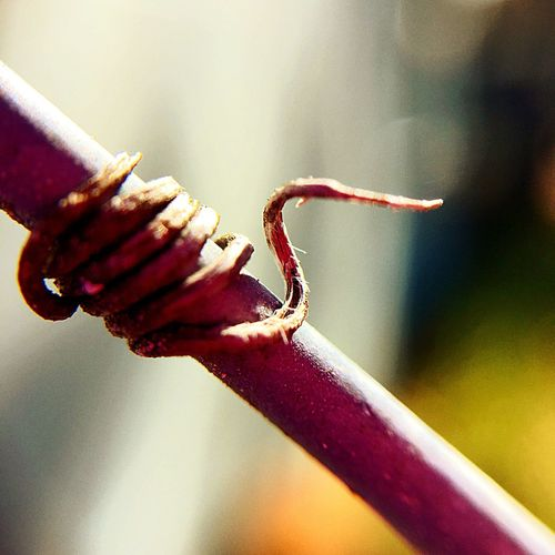 Love The Little Things In Life❤️ Just A Vine Wrapped Around A Fence Pole.