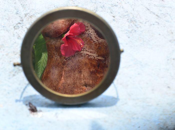 Hibiscus Nüde