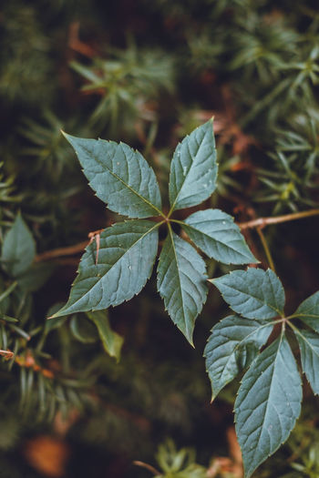 Green Color Growth Beauty In Nature Close-up Day Focus On Foreground Fragility Freshness Green Color Growth Leaf Nature No People Outdoors Plant