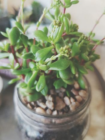 Gardening is good for the soul 🌱🌞🌼 Succulents Hometown Sunshine First Eyeem Photo
