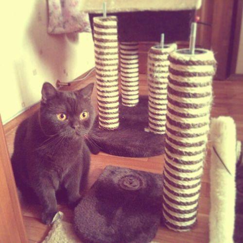Bunny  BunnyTheCat Catsofinstagram Cat Catshouse Ruins Repair кошкин дом: меняем, укрепляем.