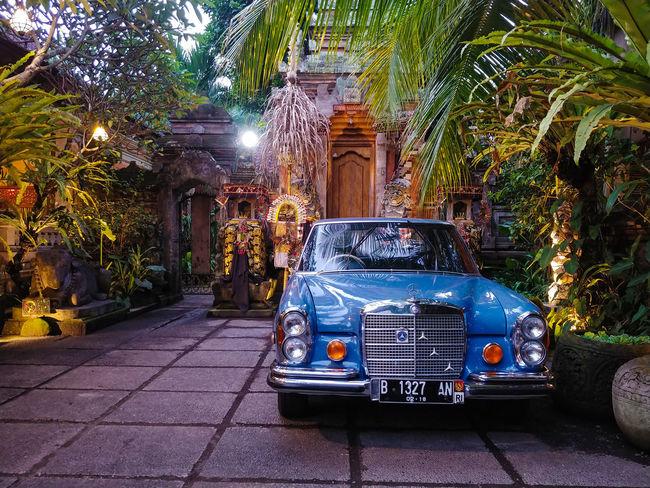 Blue Benz Traveler Mercedes Mercedes-Benz Ubud Bali Trees Mobilephotography LGV30photography Outdoor Photography Outdoors INDONESIA Tree City Architecture Vintage Car Vehicle Car Parking Collector's Car The Great Outdoors - 2018 EyeEm Awards The Street Photographer - 2018 EyeEm Awards The Traveler - 2018 EyeEm Awards