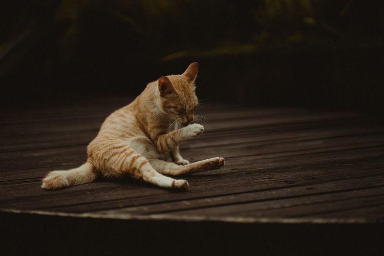 Cat resting on wooden floor