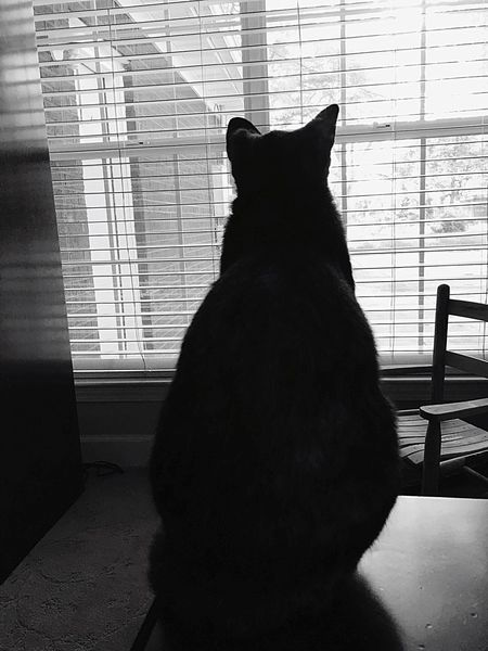 My Cat Shillouette Watching The Sunrise B&w