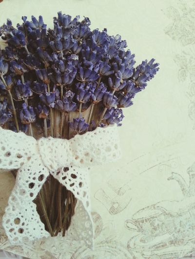 romantic. Lilac Flowers