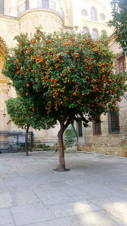 Tree City Architecture No People Built Structure Nature Outdoors Day Orange Spaın Spanish