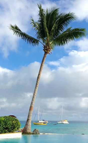 Low Angle View Of Coconut Palm Tree At Beach Against Cloudy Sky