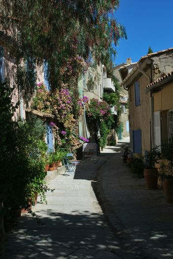 Popular Photos Streetphotography Colorful Flowers Eyeemphotography France Provence Grimaud Traveling Getting Inspired