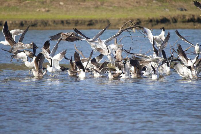 Alboroto en la laguna Water Day Group Of Animals Waterfront No People Animal Animal Themes Animal Wildlife Animals In The Wild Nature Bird Beauty In Nature