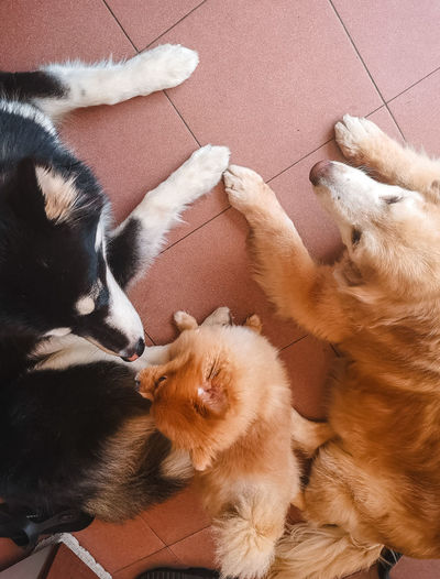 High angle view of dogs on tiled floor