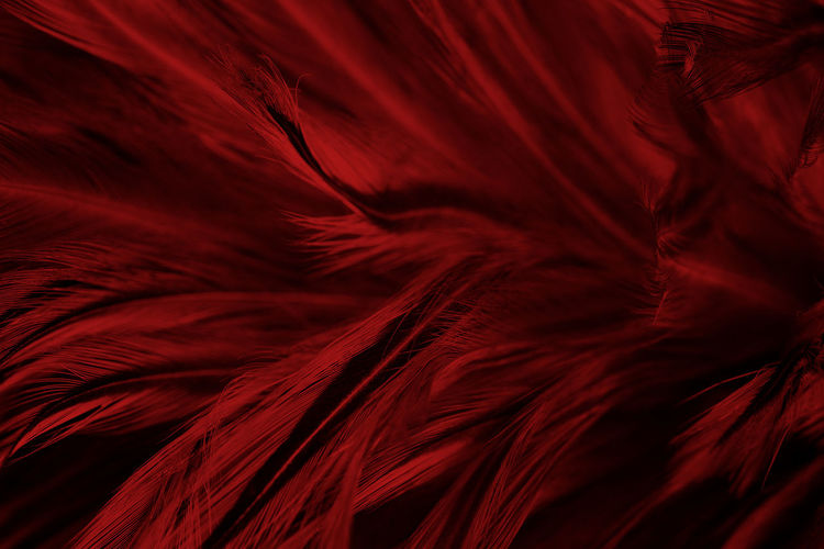 Abstract Abstract Backgrounds Backgrounds Close-up Elégance Feather  Flowing Full Frame Indoors  Luxury Motion Nature No People Pattern Red Satin Shiny Silk Smooth Softness Studio Shot Textile Textured  Vibrant Color