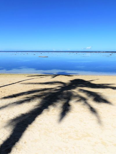 Paradise found on a beach in Fiji Tropical Palm Tree Paradise Climate Focus On Shadow Clear Sky Outdoors Beauty In Nature Tranquil Scene No People Day Tranquility Water Beach Scenics - Nature Blue Sand Sunlight Horizon Over Water Sky Horizon Sea Land Shadow Fiji