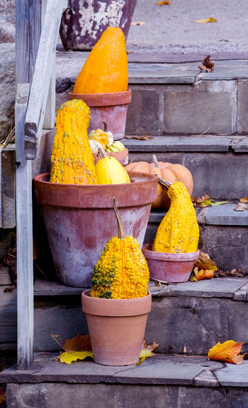 Yellow flowers in pot