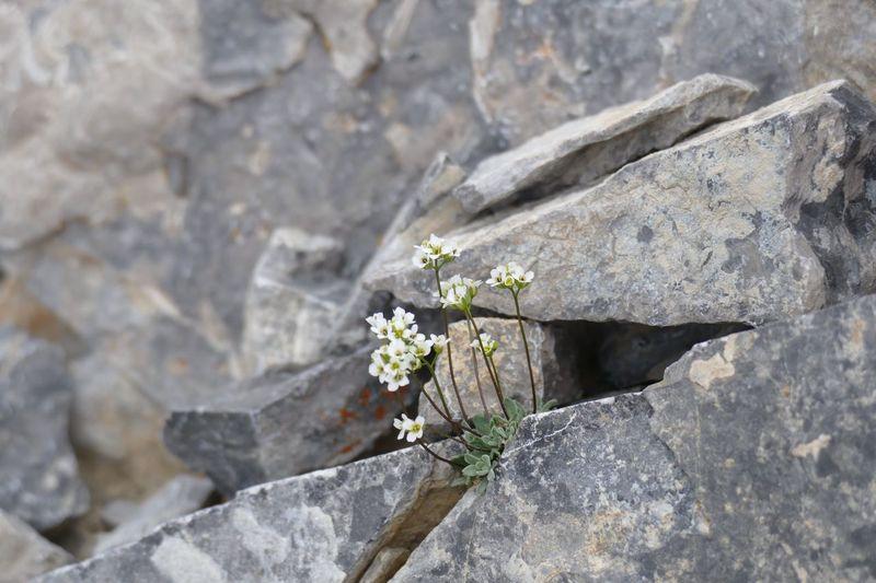 Flowers growing in rock