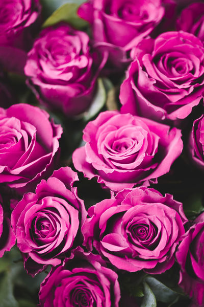 Flower Rosé Rose - Flower Pink Rose Flowering Plant Beauty In Nature Plant Freshness Fragility Vulnerability  Flower Head Petal Close-up Inflorescence Pink Color Flower Arrangement Bouquet Nature No People Full Frame High Angle View Outdoors Bunch Of Flowers Purple