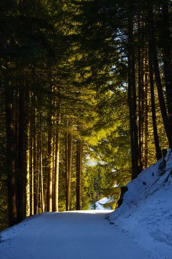 Taking a winter walk in the woods... Switzerland Flumserberg Snow Winter Tree Cold Temperature Forest Nature Beauty In Nature WoodLand