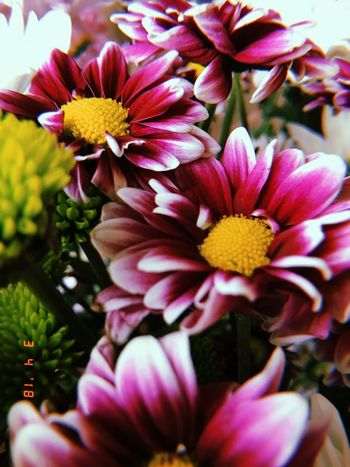 Flowers Purple Flowering Plant Flower Plant Vulnerability  Fragility Freshness Petal Flower Head Pink Color Focus On Foreground Close-up Yellow Pollen Growth Day No People