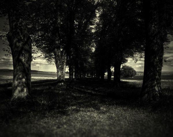 Time alone 🌸 Trees Landscape Nature Alone