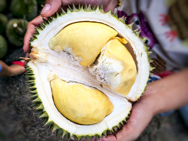 Durian king of fruit Human Hand Human Body Part One Person Holding People Adults Only Only Women Adult Real People Lifestyles Day Close-up One Woman Only Fruit Outdoors Durian Fruit Spiked Durian King Of Fruit Food Beauty Freshness Yellow Durian Tree Backgrounds