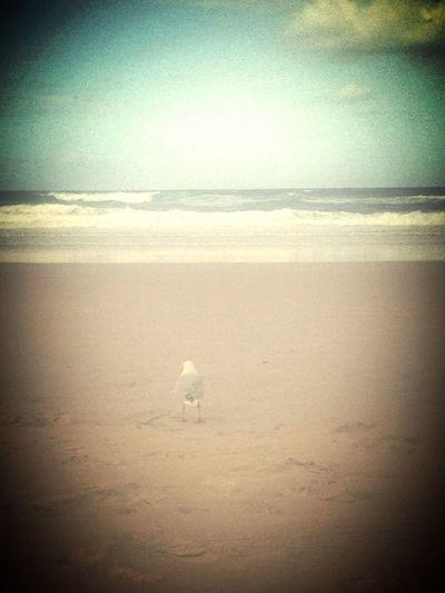 Lonely Gull SunnyQueensland Burleigh Heads Sun&sand
