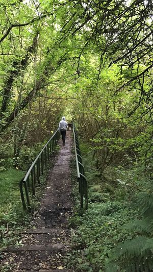 Nature Tree Day Forest Outdoors Animal Themes Tranquility Beauty In Nature Growth Full Length Mammal No People Domestic Animals Footbridge