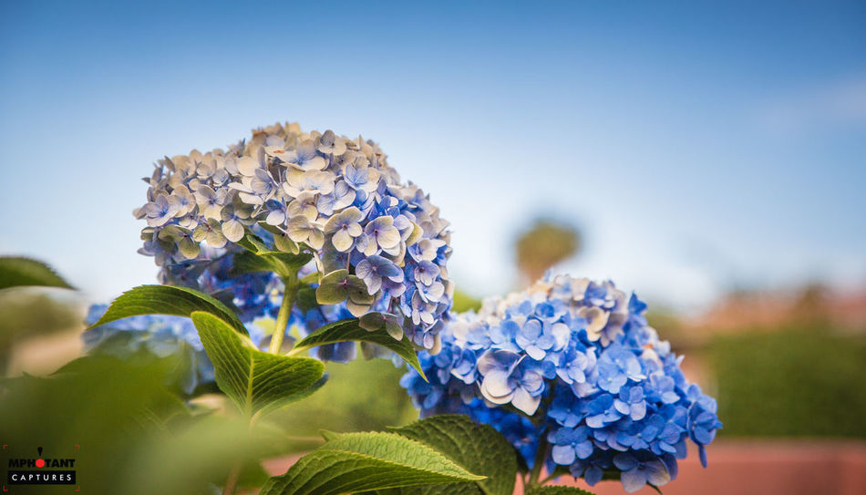 Beauty In Nature Blue Clear Sky Close-up Copy Space Day Flower Flower Head Focus On Foreground Fragility Freshness Growth Nature No People Outdoors Petal Plant Purple Selective Focus Sky
