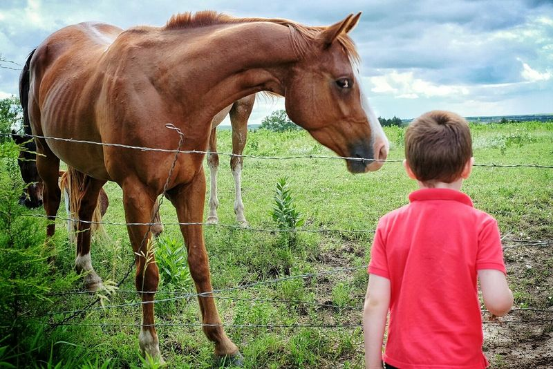 Authentic Moments Color Photography A Day In The Life Horses Rural America