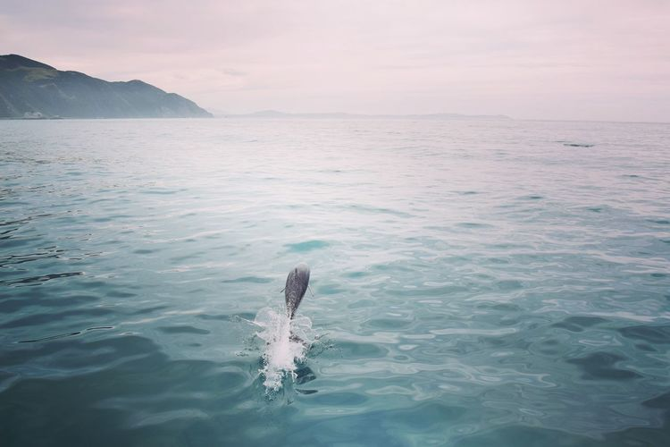 Dolphin swimming in sea against sky