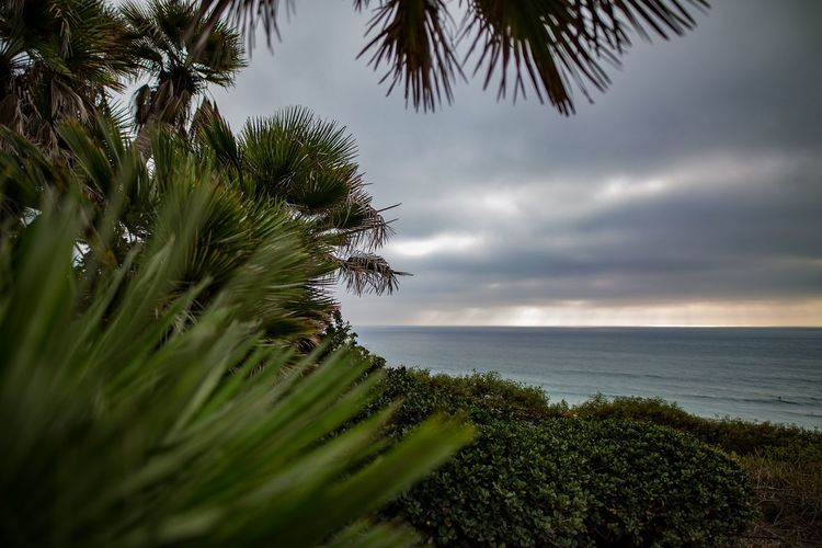 View of stormy skies with tropical plants at Swamis overlook in Encinitas, San Diego, California California Encinitas San Diego SoCal Southern California Sunset Surf Travel Destinations Nature Photography Coast Plant Water Tree Sea Sky Beauty In Nature Tranquility Scenics - Nature Growth Palm Tree Tranquil Scene Nature Tropical Climate Green Color Horizon Over Water Horizon Cloud - Sky No People Land Outdoors