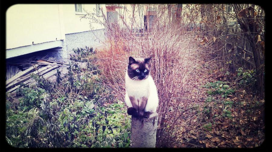 Котик First Eyeem Photo cat