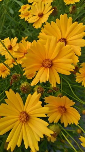 Yellow sunny