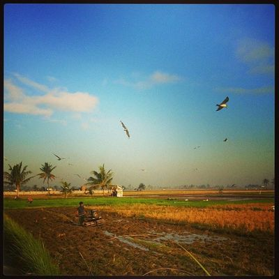 Morning view. Farmer Araro Bulakenyo Naturelover Bluesky BulacanBulacan Philippines @tuklas_pilipinas @loves_philippines @photosharingcommunity