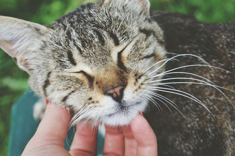 Cropped image of person touching cat