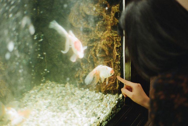 High Angle View Of Woman Touching Fish Tank At Aquarium