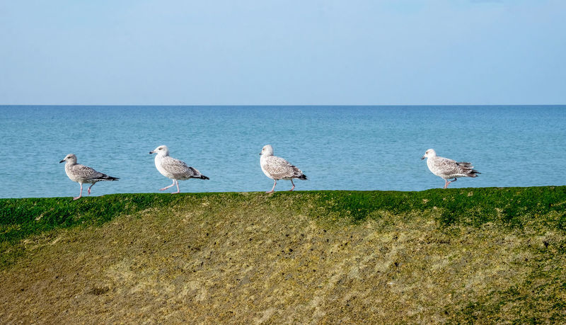 In A Row Same Direction Seagulls Animal Animal Themes Animal Wildlife Animals In The Wild Beach Beauty In Nature Bird Blue Day Flock Of Birds Group Of Animals Horizon Horizon Over Water Land Nature No People Outdoors Sea Seagull Sky Vertebrate Water