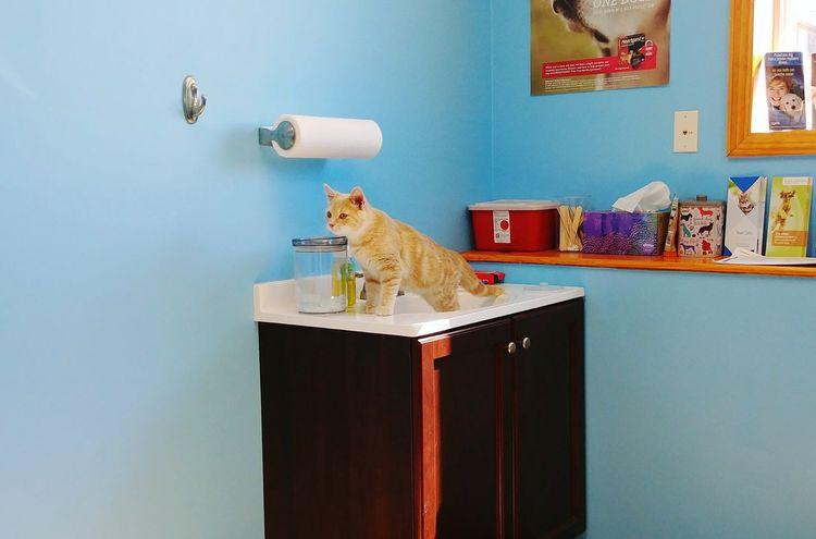 At The Vet Kitten Animal Pets Indoors  Feline Cute One Animal Full Length