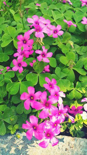 Flower Pink Color Beauty In Nature Nature No People Flowers Yalova Turkey Nature Yalovasahili