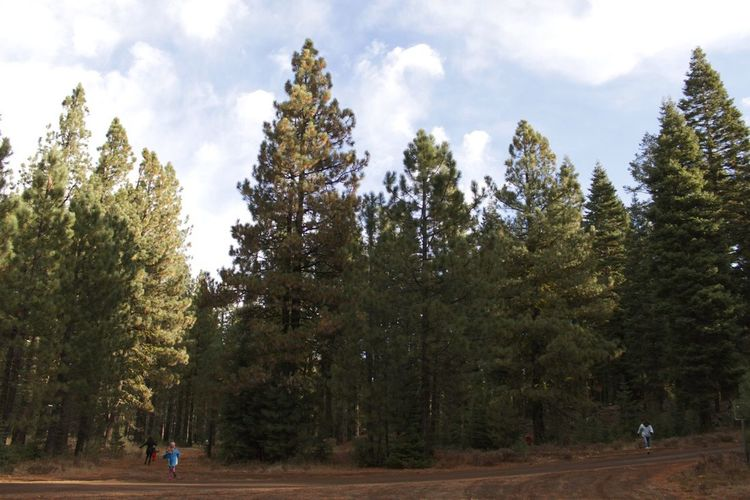 Norcal Forest Trees