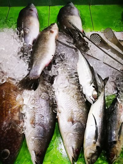 Seafood Fish Water Green Color Freshness No People Day Healthy Eating Outdoors Close-up Food Nature Animal Themes Cold Fresh Cold Temperature Ice Delicious Kerang Seafood For Sale Food And Drink Large Group Of Animals Seashell Market Seafoods