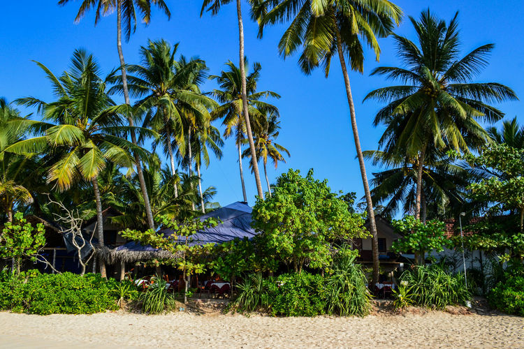 Mirissa Mirissabeach Beach Beauty In Nature Blue Clear Sky Coconut Palm Tree Day Green Color Growth Land Nature No People Outdoors Palm Tree Paradise Paradise Beach Plant Scenics - Nature Sky Tranquil Scene Tranquility Tree Tropical Climate Tropical Tree