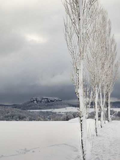 Sächsische Schweiz Saxon Switzerland Snow Cold Temperature Winter Tree Scenics - Nature Beauty In Nature Plant Sky Tranquil Scene Landscape Frozen Nature Tranquility Branch Cloud - Sky White Color No People Outdoors Blizzard Treelined Pfaffenstein