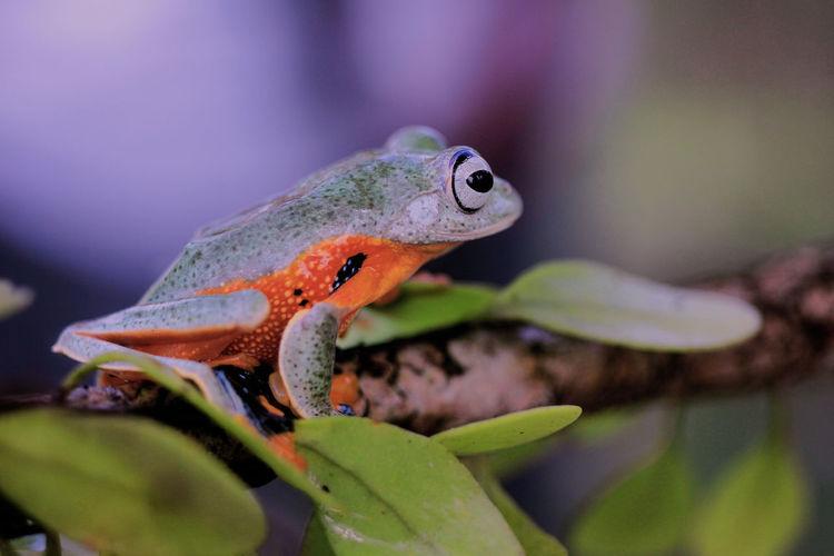 Frog Leaf Living Organism Close-up Plant Animal Eye Frog Amphibian