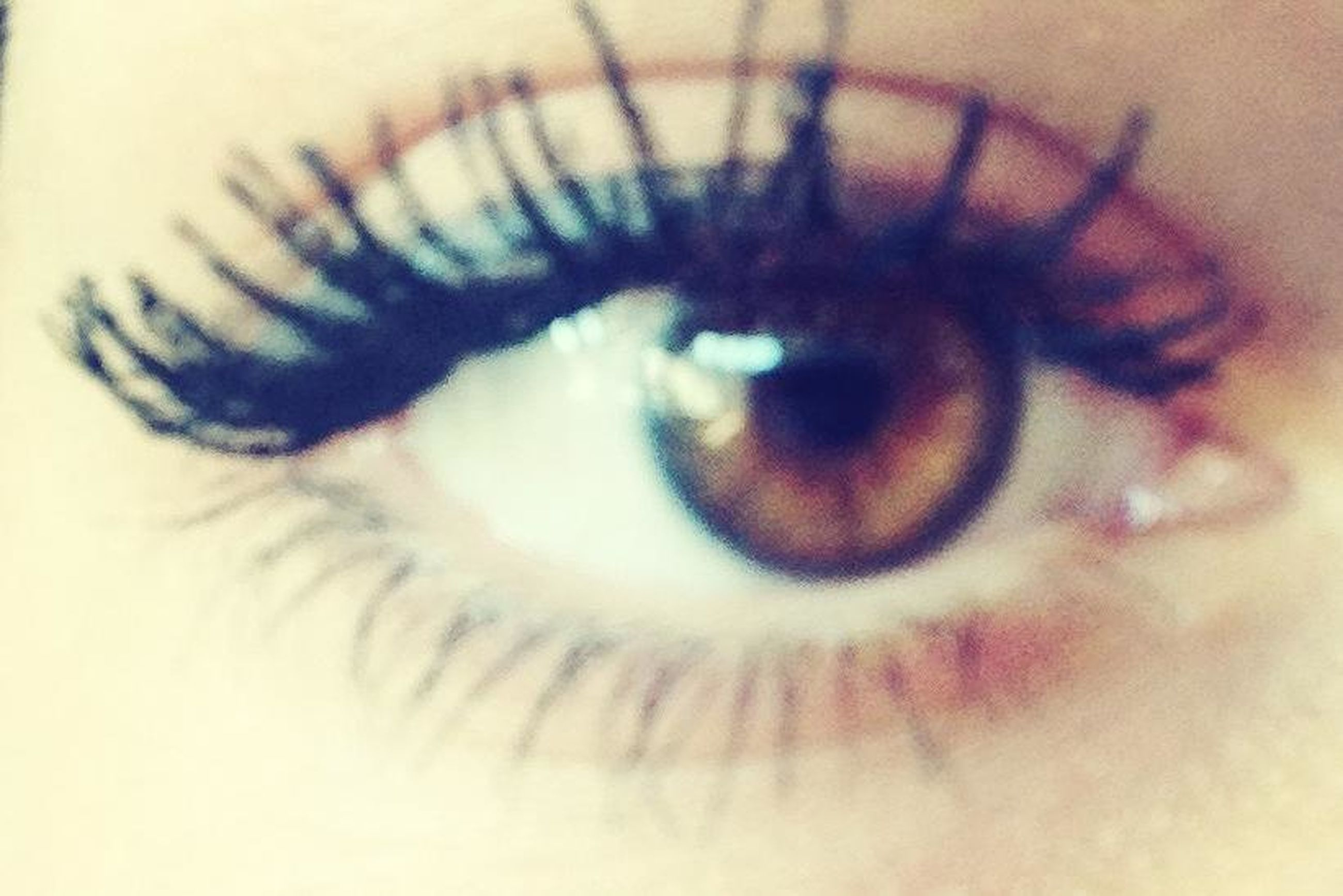 human eye, eyelash, eyesight, close-up, sensory perception, eyeball, part of, indoors, looking at camera, iris - eye, extreme close-up, portrait, unrecognizable person, human skin, vision, one animal, pets