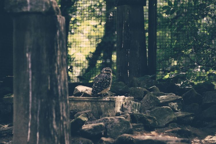 Animal Themes Animals In The Wild Avian Bird Dirty One Animal Outdoors Perching Tranquility Wildlife Zoology