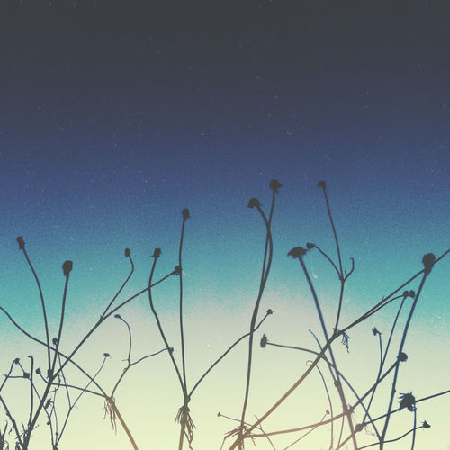 Bare Plant Beauty In Nature Blue Blues Copy Space Gradient Low Angle View Moody Nature Outdoors Outside Peaceful Plant Plant Scenics Sky Somber Sunset Thoughtful Tranquil Scene Tranquility Twigs