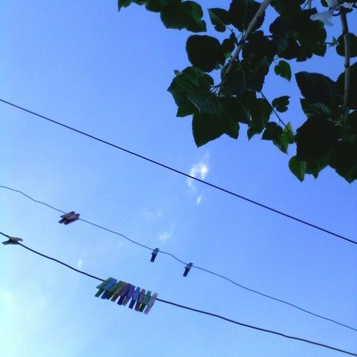 Low Angle View Blue Tree Leaf Cable Branch Hanging Day Power Line  Nature Beauty In Nature Clothespins Clothespin Colorful Showcase: 2016 Showcase: October Eyeem Market @wolfzuachis Wolfzuachis Ionitaveronica Edited By @wolfzuachis Blue Sky Clear Sky Nature_collection No People