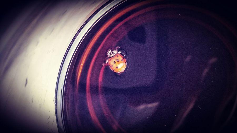 Cokefloat Ladybug First Eyeem Photo