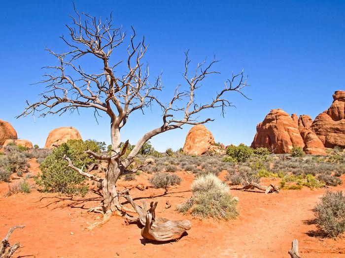 Tree on rock formations in desert against blue sky